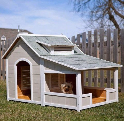 doghouse blog1